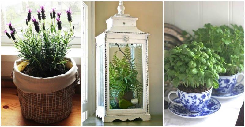 indoor-houseplants