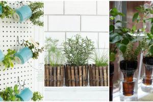 indoor-herb-gardens