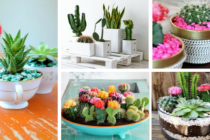 How To Grow Cactus Indoors-5