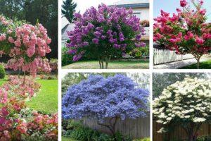 Spring Flowering TreesF-5