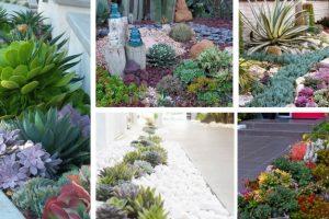 Succulent Garden IdeasF-5